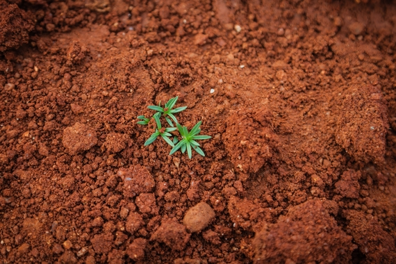 Orange Soil with a plant growing